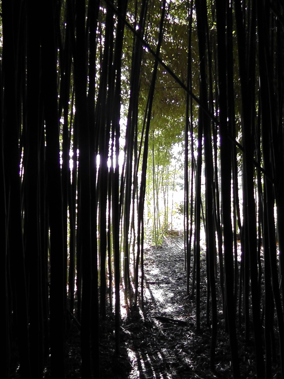 bamboo forest, rye, westchester, new york, travel, travelogue, photography, ailsa prideaux-mooney