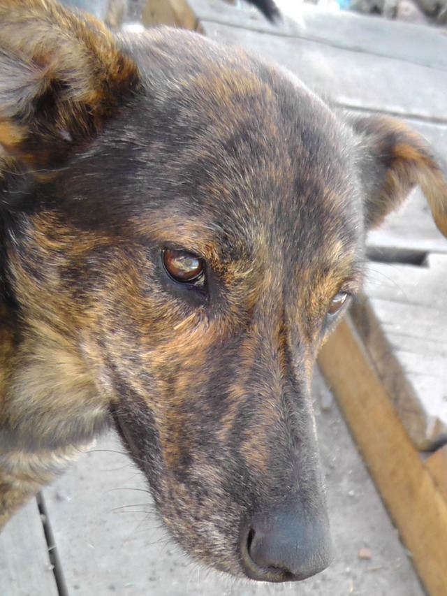 stray dog, atitlan, panachajel, guatemala