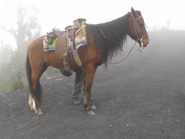 mistyhorse