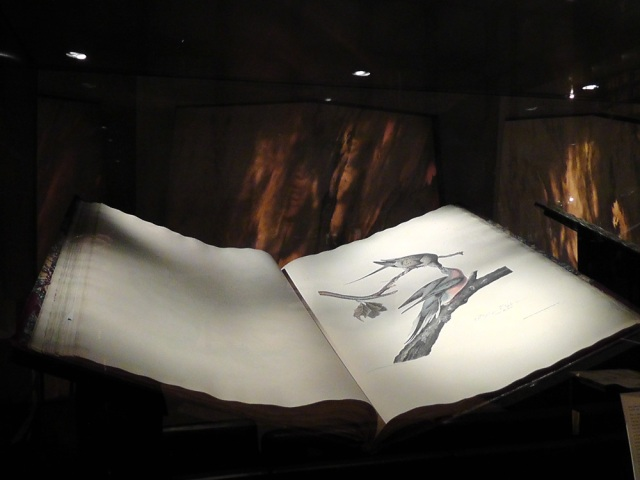 audubon, beinecke, rare manuscript, yale, travel, travelogue, ailsa prideaux-mooney