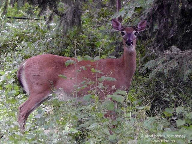 today deer croton on hudson upstate new york