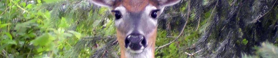today deer
