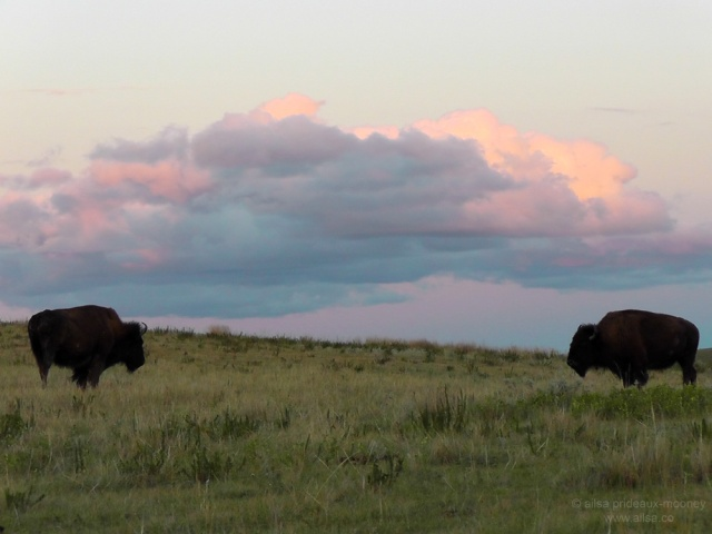 sunset travel buffalo theodore roosevelt national park