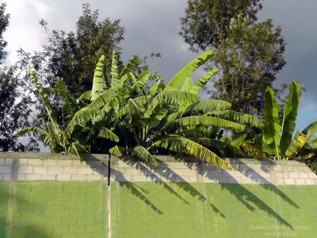 foliage palm antigua guatemala fall autumn leavees