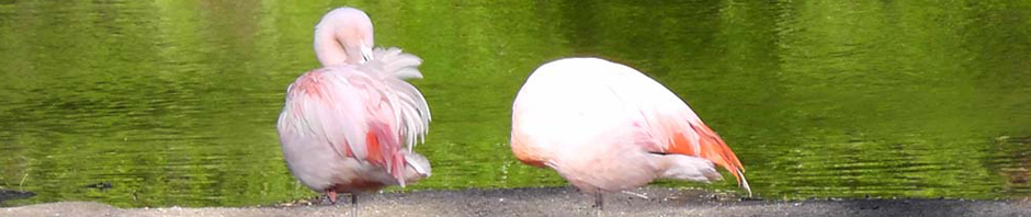 pink-flamingo-couple