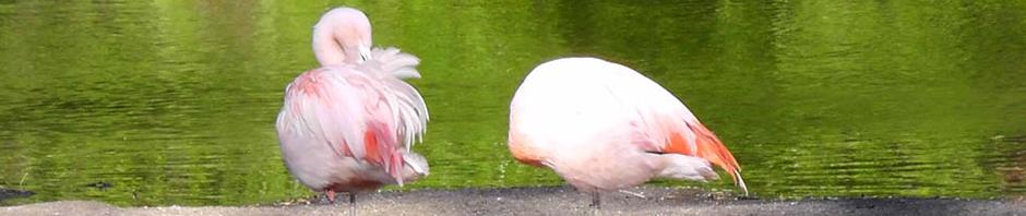 pink-flamingo-couple