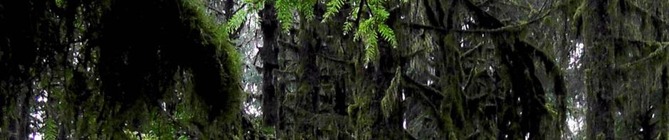 hoh rain forest olympic penninsula washington us usa america