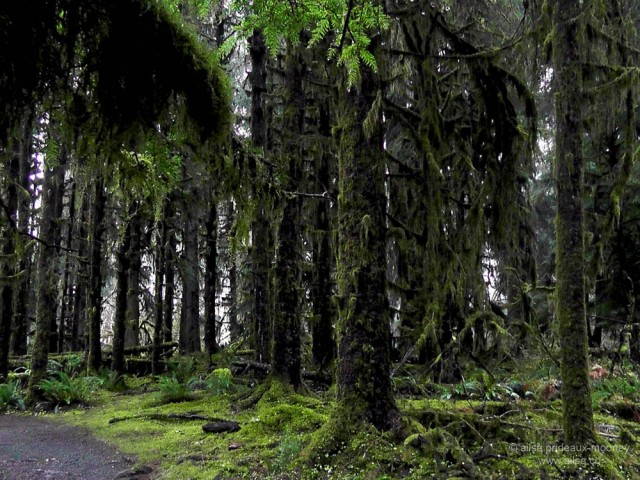 hoh rain forest olympic national park penninsula usa washington us