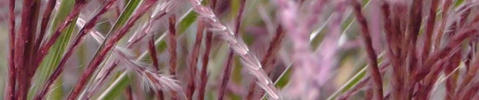 grasses staten island snug harbor botanic garden