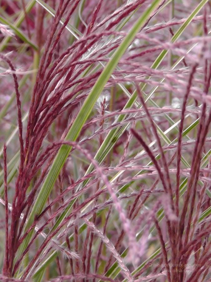 grasses snug harbor staten island new york