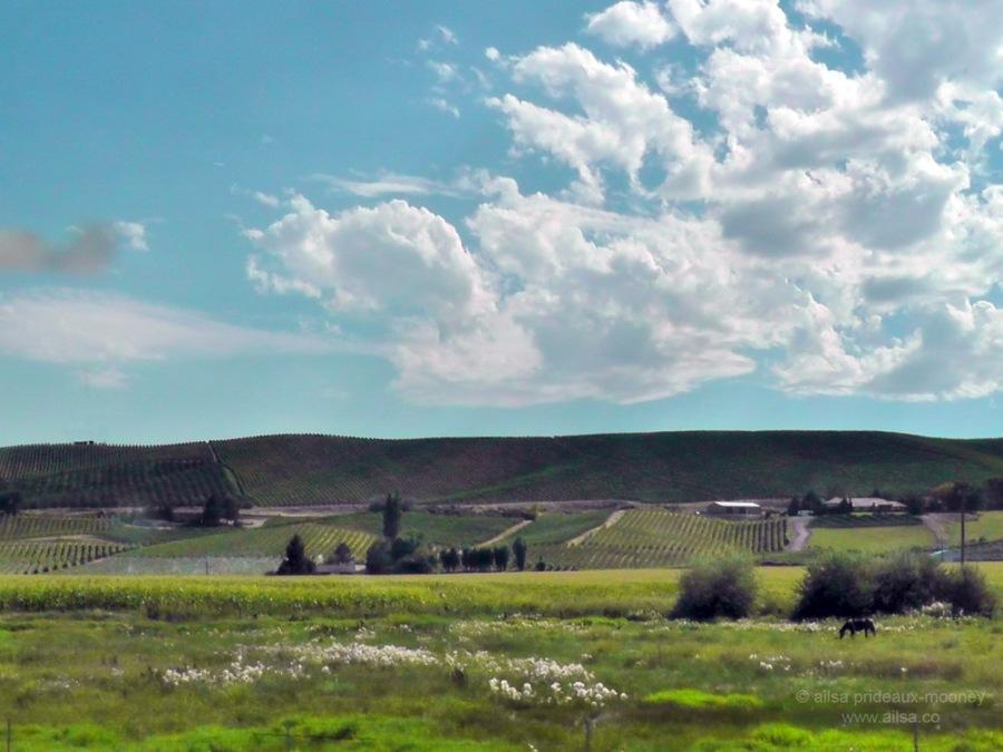 yakima valley washington us usa america road trip driving fertile vineyard orchard