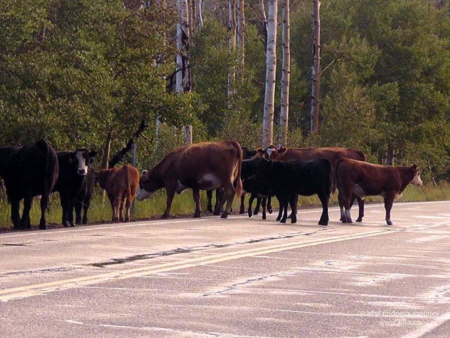 dixie national forest utah road trip us usa america birch