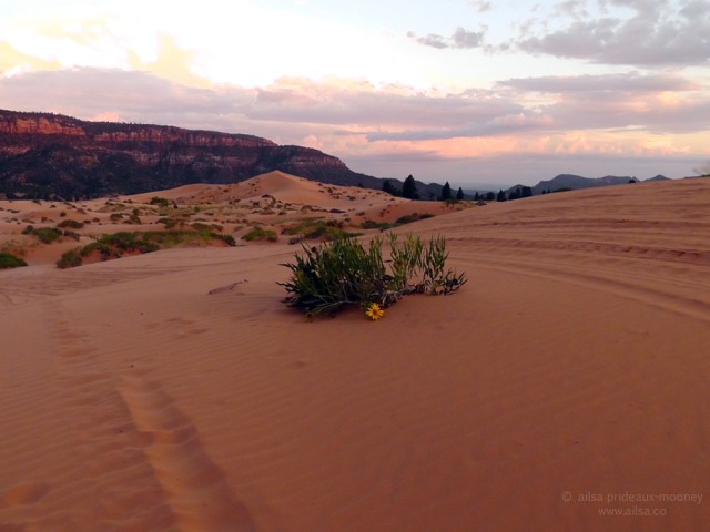 coral pink sand dunes, state park, utah, sunset, road trip, travel, photography, travelogue, ailsa prideaux-mooney