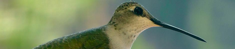 hummingbird kanab utah road trip