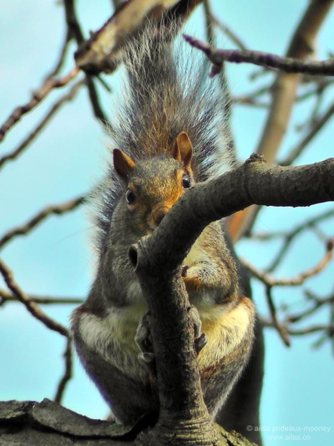 squirrel snug harbor staten island botanical garden