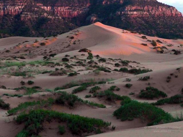 coral pink sand dunes state park utah road trip