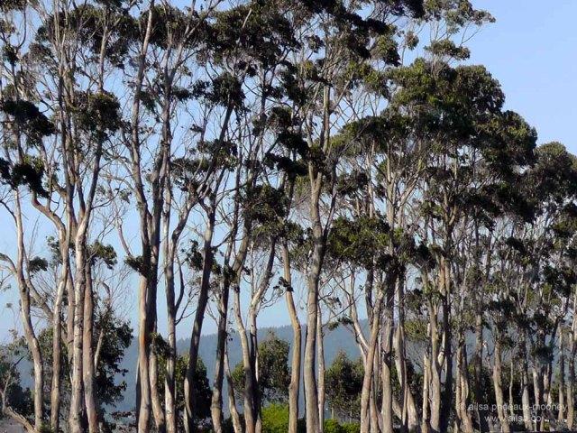 california coast trees road trip us usa america travel