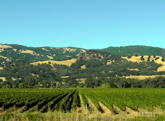 california vineyard winery vines us usa america road trip travel