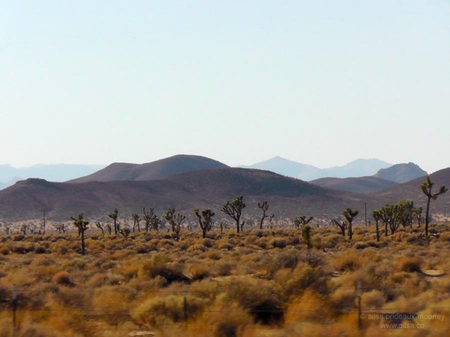 mojave joshua tree desert california road trip us usa america driving travel