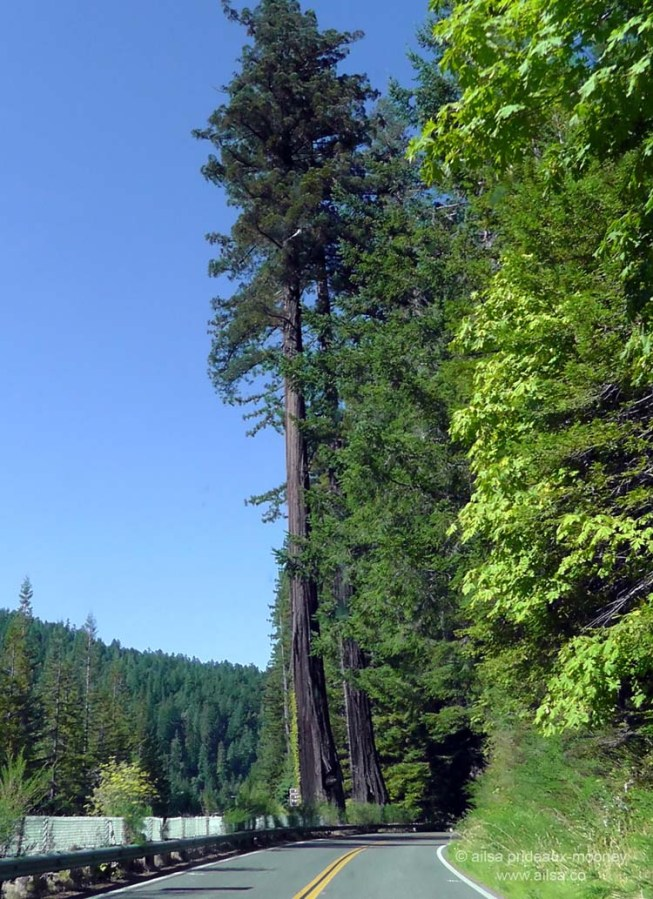 humboldt forest state park redwoods california redwood highway