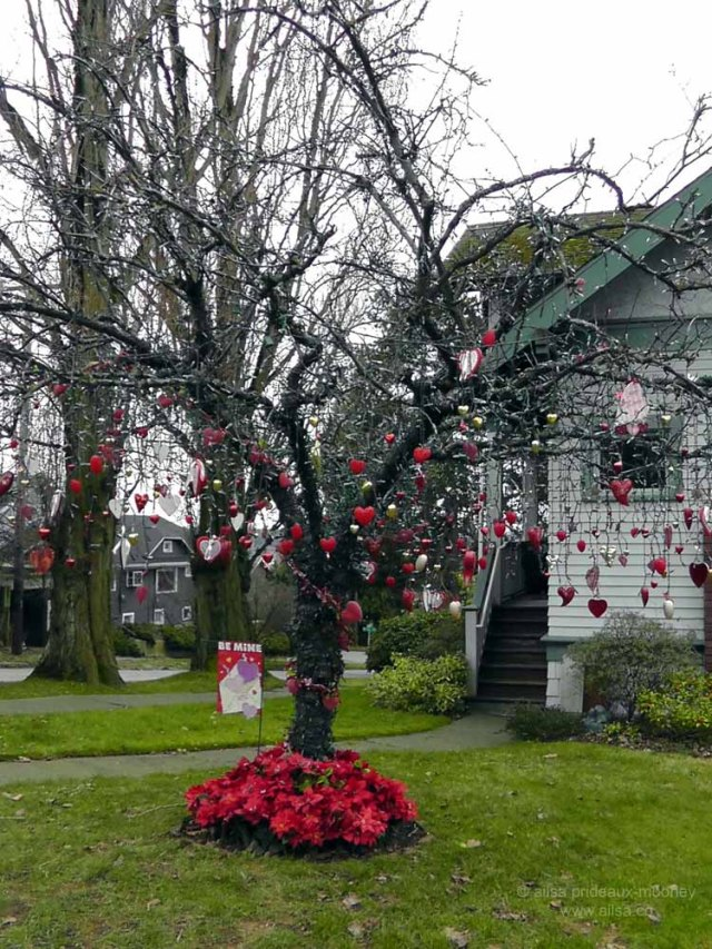 seattle washington valentine's day holiday tree phinney ridge