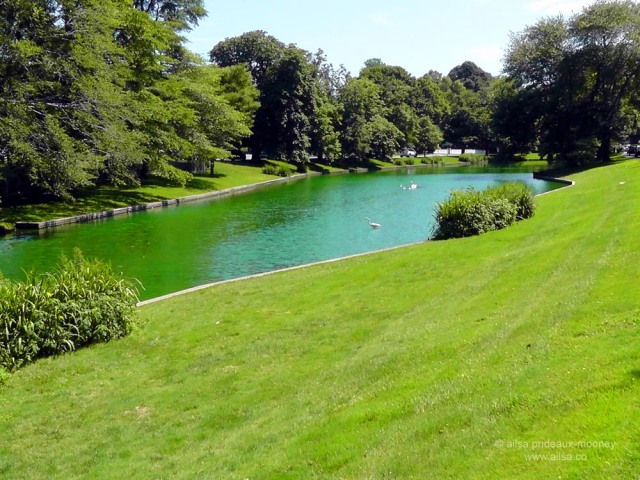 swan, hamptons, the hamptons, east hampton, town pond, travel, usa, new york, long island, green dye