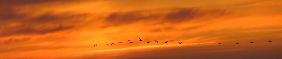 us, road trip, roadtrip, usa, america, oregon coast, oregon, united states, travel, oregon dunes, sunset, geese