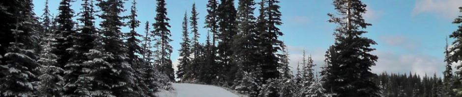 olympic mountains national park, winter, snow, forest, hurricane ridge, travel, ailsa prideaux-mooney