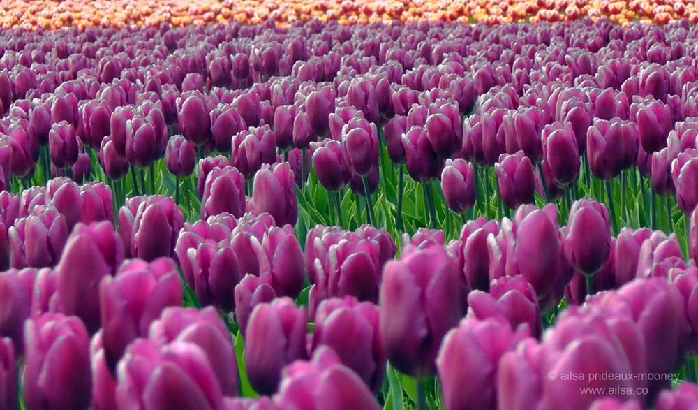 Tiptoe through the tulips with lyrics