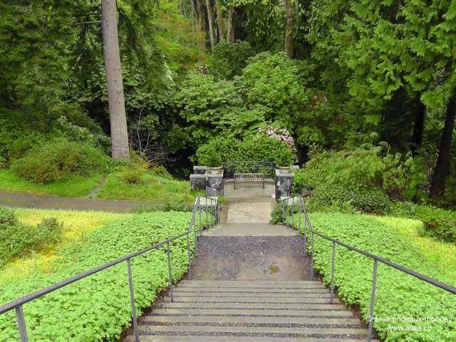 bloedel reserve, seattle, bainbridge island, garden, gardens, rain, travel, travelogue, ailsa prideaux-mooney, stairway