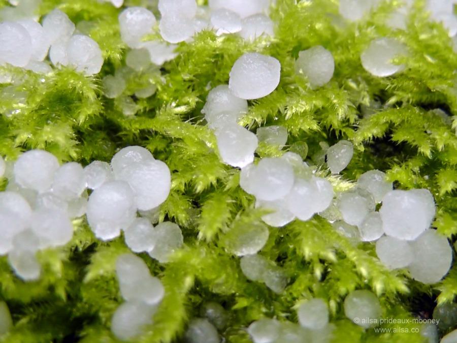 hailstones, moss, travel, photography, seattle, travel, travelogue, ailsa prideaux-mooney