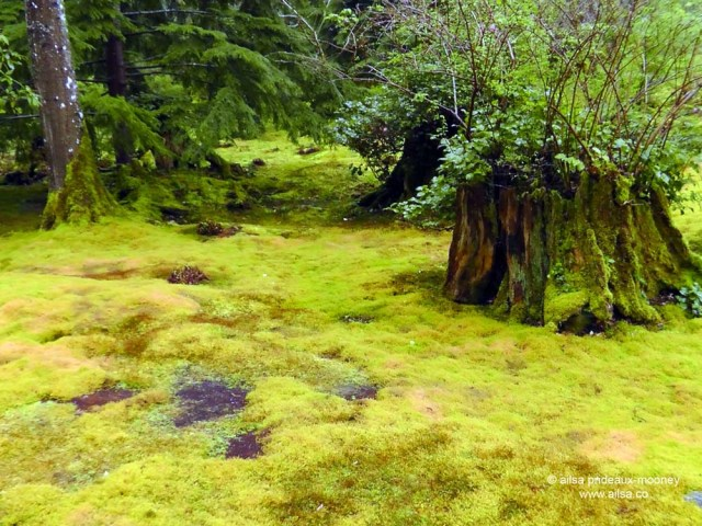 bloedel reserve, seattle, bainbridge island, garden, gardens, rain, travel, travelogue, ailsa prideaux-mooney, moss garden