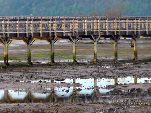 nisqually national wildlife reserve, olympia, seattle, washington, travel, photography, ailsa prideaux-mooney