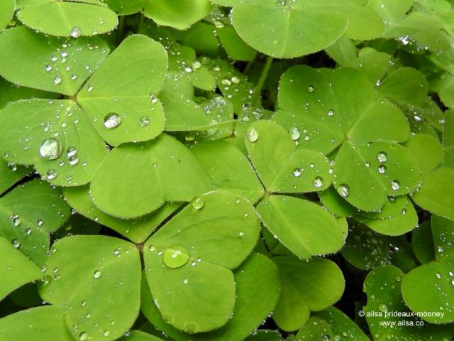raindrop photography, bloedel reserve, seattle, bainbridge island, garden, gardens, rain, travel, travelogue, ailsa prideaux-mooney