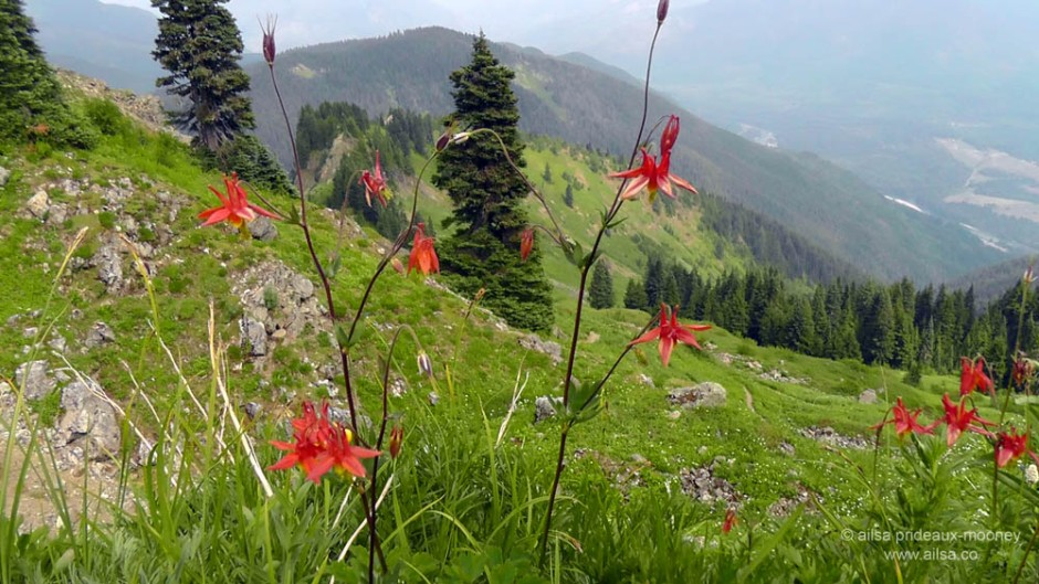 sauk mountain, wildflowers, washington, north cascades, travel, ailsa prideaux-mooney