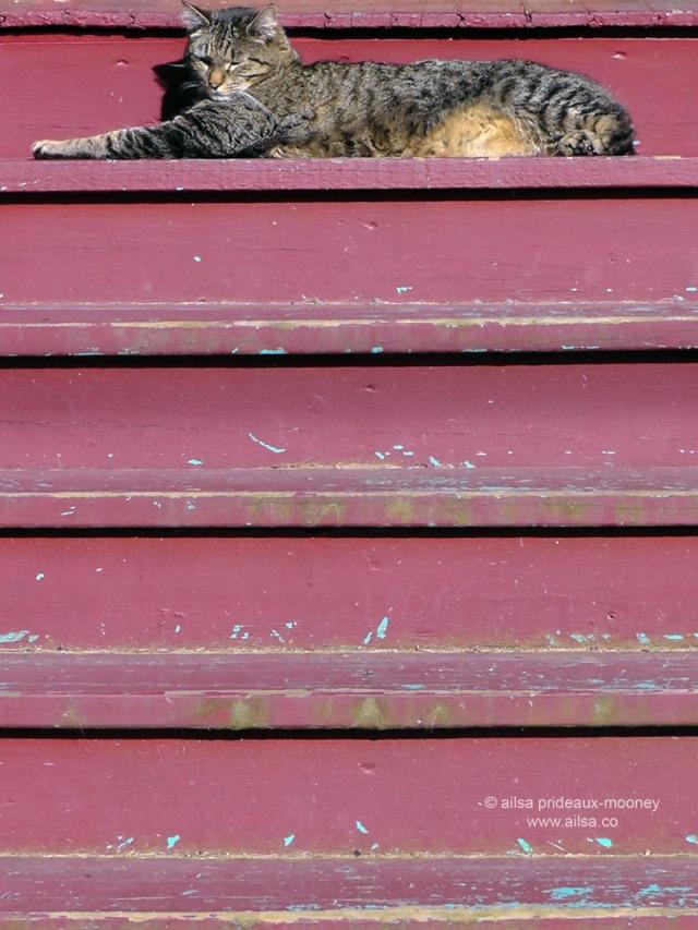 relaxed cat, ballard, seattle, washington, travel, travelogue, photography, ailsa prideaux-mooney