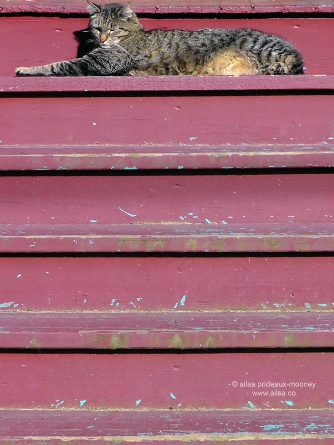 relaxed cat, ballard, seattle, washington, travel, travelogue, photography, ailsa prideaux-mooney