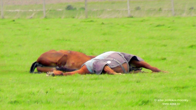 sleeping horses, skagit valley, travel, travelogue, ailsa prideaux-mooney, photography