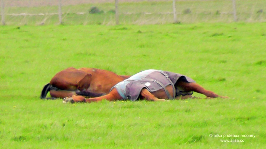 sleeping horses, skagit valley, travel, travelogue, ailsa prideaux-mooney, photography