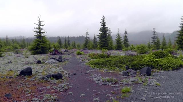 mount st helens, lava canyon, washington, hiking, travel, travelogue, photography, ailsa prideaux-mooney