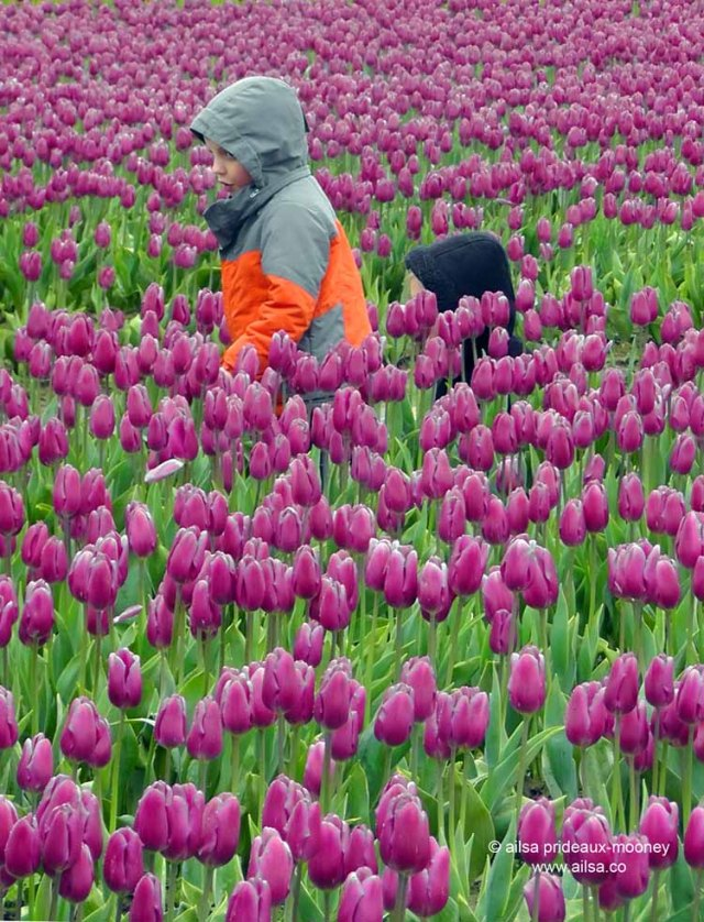 skagit valley tulip festival, washington, travel, travelogue, photography, ailsa prideaux-mooney