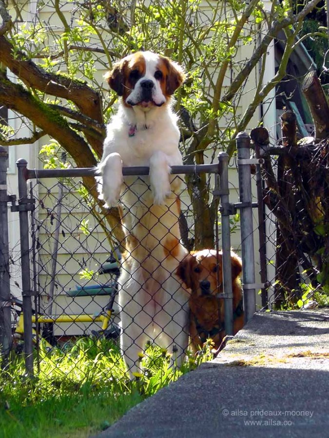 dogs, pets, animals, photography, travel, travelogue, ailsa prideaux-mooney