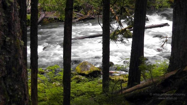 mount rainier, scenic byways loop, cascades, washington, road trip, travel, travelogue, photography, ailsa prideaux-mooney, wenatchee national forest, william o douglas wilderness, ohanapecosh river