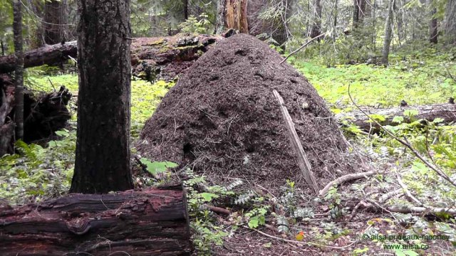 ant hill, mount rainier, scenic byways loop, cascades, washington, road trip, travel, travelogue, photography, ailsa prideaux-mooney, wenatchee national forest, william o douglas wilderness, pleasant valley