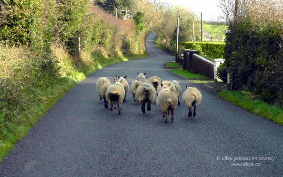 ireland, sheep, travel, travelogue, photography, ailsa prideaux-mooney