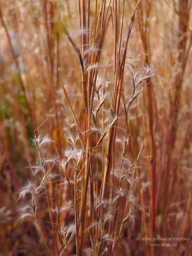 grasses, seedhead, piet oudolf, battery park, new york, travel, photography, travelogue, ailsa prideaux-mooney