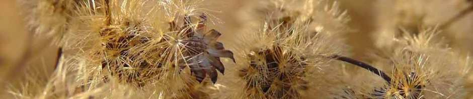 grasses, seedhead, piet oudolf, battery park, new york, travel, photography, travelogue, ailsa prideaux-mooney