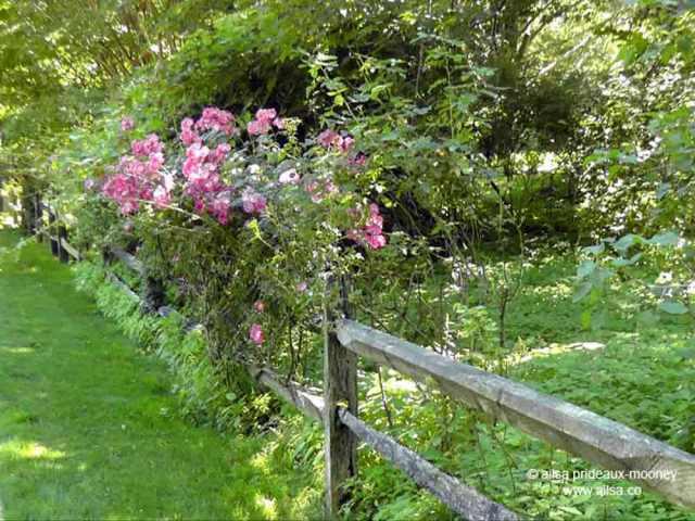 hamptons, long island, new york, travel, travelogue, gardens, photography, ailsa prideaux-mooney