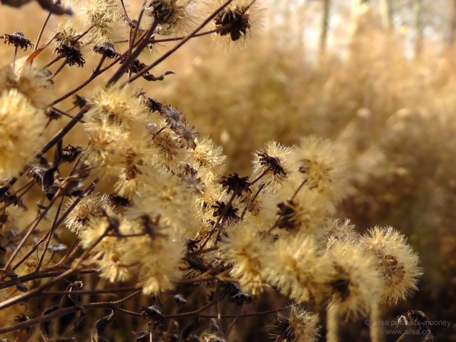 piet oudolf, battery park, new york, prairie planting, seed heads, travel, travelogue, photography, nature, ailsa prideaux-mooney