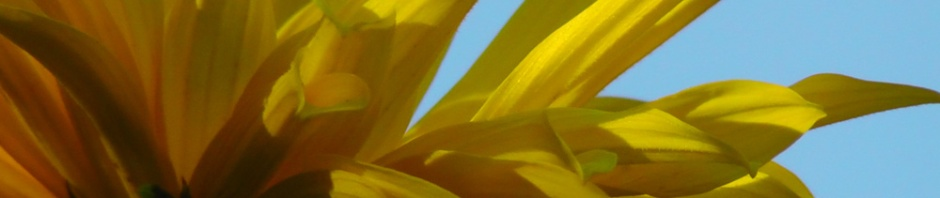 yellow daisy, flower, nature, travel, travelogue, ailsa prideaux-mooney